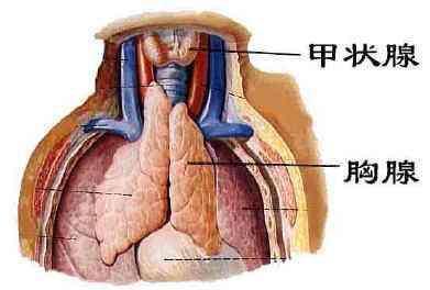 单孔胸腔镜微创手术解决您惧怕传统手术开胸的苦恼